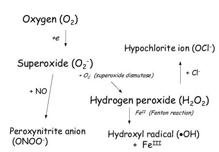 hydrogen peroxide free radical pdf viewer