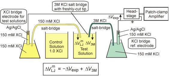 Micro-agar salt bridge in patch-clamp electrode holder