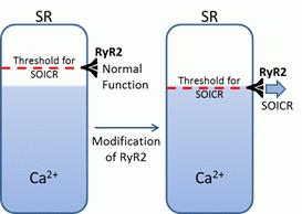 Cardiac ryanodine receptor mutations linked to arrhythmia and sudden